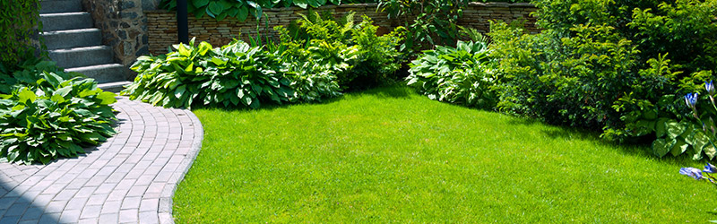Big Reasons Why You Must Get Rid Of Weeds