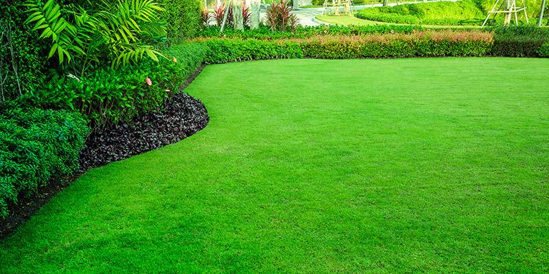 Lawn Care & Maintenance in Seattle WA