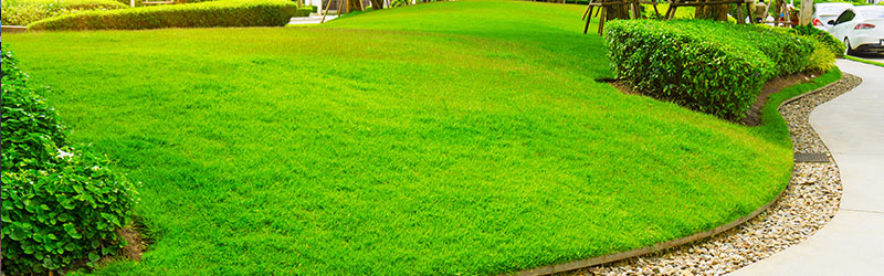 LAWN CARE: KEEPING YOUR LAWN LUSH