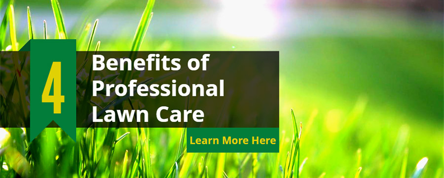4 Benefits of Professional Lawn Care: Save Money & Enjoy Nature!