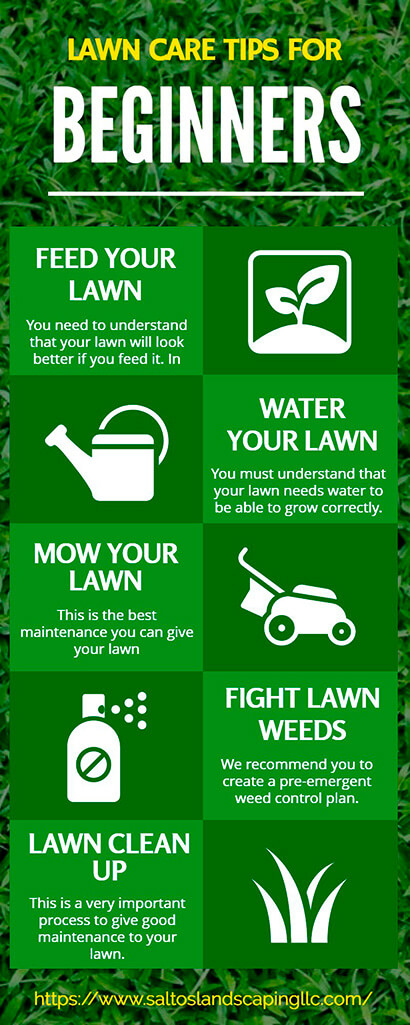 These are the Main Lawn Care Tips for Beginners