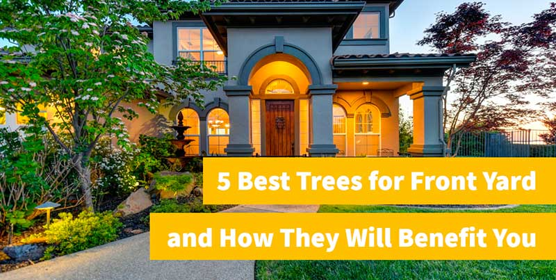 best trees and shrubs for front yard