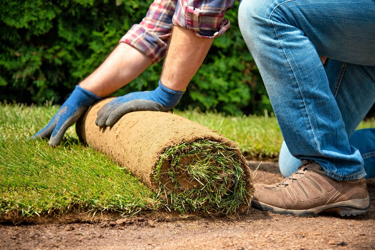 How to Choose the Right Grass For Your Lawn