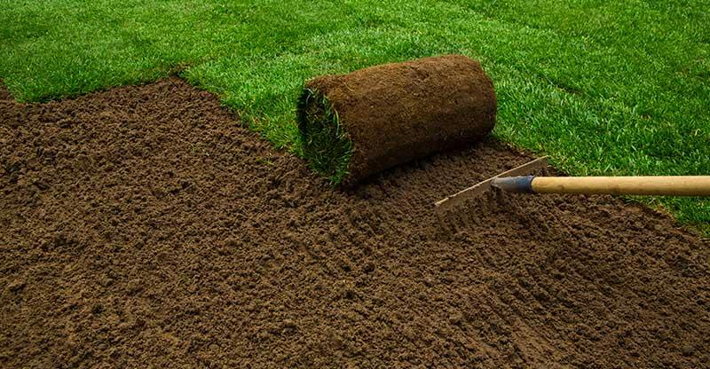 Advantages of Installing a Sod Lawn