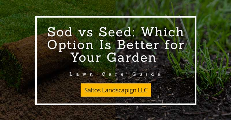 Advantages of Sod vs Seed