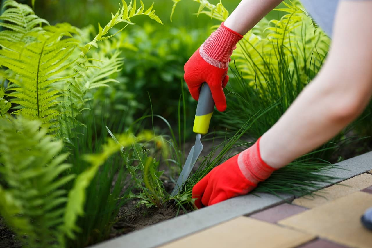 Eliminate Weeds and Clean Your Garden
